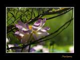 _MG_2899 nature fleur.jpg