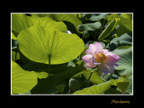 _MG_2909 nature fleur.jpg