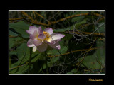 _MG_2925 nature fleur.jpg