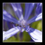 _MG_2494 nature fleur.jpg