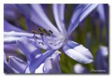 _MG_2498 nature fleur.jpg