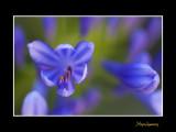 _MG_2722 nature fleur.jpg