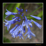 _MG_2529 nature fleur.jpg