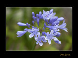 _MG_2539 nature fleur.jpg