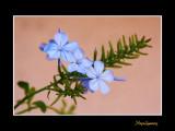 _MG_2644 nature fleur.jpg