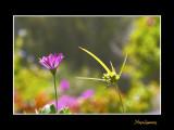 _MG_2646 nature fleur.jpg
