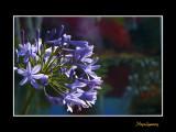 _MG_2676 nature fleur.jpg