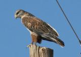 Arizona Birds; December 2011