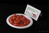 Red Pisa Date_hf.jpg