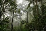 Bellavista Cloud Forest Reserve (2011)