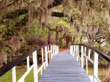 Oak Tree Walk