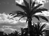 nerja palms