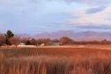 Farm fields in Mesilla