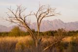 Organ Mountains from the Mesilla Valley Bosque Park