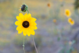 Heavy summer monsoon rains produced many wildflowers in September