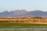 Irrigated farm field with Organ Mountains in background