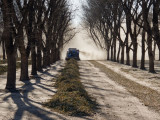 Mesilla pecan Orchard -- clean up after the harvest