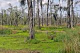 The Bayou Wetlands