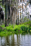 The Bayou LaBranche