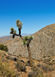 The Joshua Tree National Park
