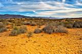 Golden Desert