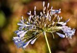 Incidental Flower  Close-up :)