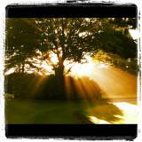 morning light p.jpg