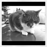 cat p.jpg