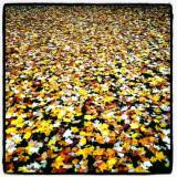 leaf on ground p.jpg