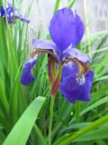 Purple FlowerJune 3, 2011
