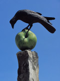 Crow on AppleJune 4, 2011