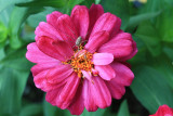 Flower and Spider MacroJune 13, 2011