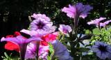 Backlit FlowersJune 18, 2011