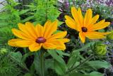 Yellow DaisiesJuly 8, 2011