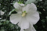 Water Drops on FlowerAugust 15, 2011