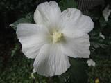 Water Drops on White FlowerSeptember 20, 2011