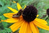 Grasshopper CloseupSeptember 23, 2011