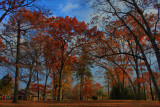 Autumn Scene in HDRNovember 11, 2011