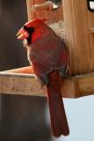 CardinalNovember 22, 2011