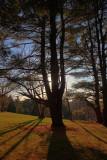 Pine Tree Shadows in HDRDecember 11, 2011