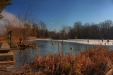 Pond Freezing over in HDRJanuary 6, 2012