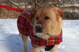 Glinda with Snowy NoseJanuary 22, 2012