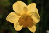 Backlit Flower MacroApril 4, 2012