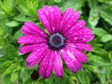Waterdrops on DaisyMay 9, 2012