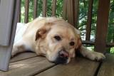 Glinda Trying to SleepMay 19, 2012