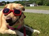 Glinda Wearing SunglassesMay 27, 2012