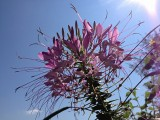 Flower With Sky BackgroundAugust 2, 2012