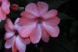 Flower MacroAugust 14, 2012