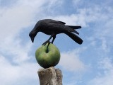 Crow on AppleSeptember 8, 2012