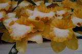 Snow on Silk DaffodilsJanuary 15, 2008